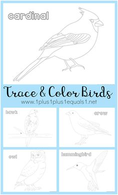 Free Trace And Color Birds Printables
