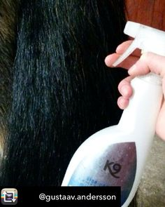 K9 Horse Mirra Shine, non slippery, no silicone but super shine🌟🌟🌟 - - - - -  #k9horse #horsegrooming #k9horsesweden #horses #horselove  #horseshampoo #oldenburger #hengst #horse #häst #hästar #rider #mane #tail #cabello #equesrianlife #cavalo #cheval #paard #equestrianstyle #horze_equestrian #horze #hooks