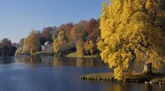 Stourhead. The beautiful tulip tree goes yellow in autumn and looks beautiful with the Pantheon in the background © NTPL/Stephen Robson
