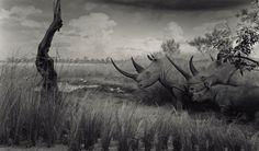 Inanimate Natural History Displays Look Like Real Life Scenes - My Modern Met