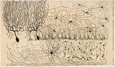 Viewing the brain through the master hand of Ramon y Cajal