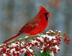 Image result for images of birds in winter