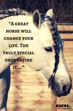 """A great horse will change your life. The truly special ones define it…"""