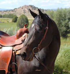 Morgan horse Beautiful Creatures, Animals Beautiful, Beautiful Things, Morgan Horse, Types Of Horses, Horses For Sale, Trail Riding, Horse Breeds, Horse Photography