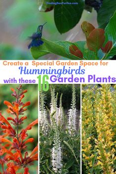 16 Perennials That Attract Hummingbirds to Your Garden! – Kudos Yellow Agastache Perennials for Hummingbirds – Kudos Yellow Agastache Kudos Yellow Agastache has tightly-packed