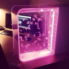 Moon jellyfish in Pulse 80 Jellyfish Tank with pink LED lights Moon j. Jellyfish Tank, Jellyfish Facts, Jellyfish Drawing, Jellyfish Painting, Jellyfish Tattoo, Jellyfish Quotes, Jellyfish Aquarium, Watercolor Jellyfish, Jellyfish Light