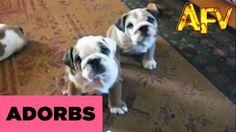 Bulldogs... we'll take three, please. :)