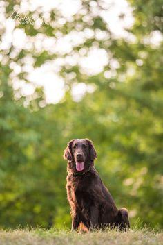Justýnka Dog Photography, Dogs, Animals, Animales, Animaux, Pet Dogs, Doggies, Animal, Animais