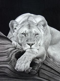 Daydreaming (Pencil on paper) by ~StephenAinsworth on deviantART
