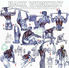 Back Workout - Healthy Fitness Exercises Gym Bicep Tricep