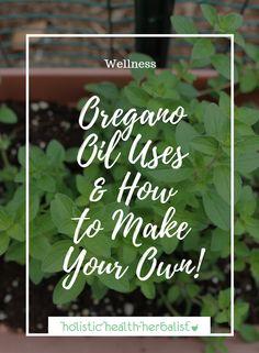 Oregano Oil Uses and How to Make Your Own! - Holistic Health Herbalist #coldandflu #oregano #oiloforegano