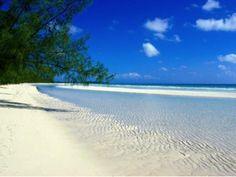 Playa Azul arena fina, mar abierto ¿Qué más quieres? En esta playa se encuentran campamentos en pro de la conservación de la tortuga marina con eventos anuales en el mes de octubre, donde se liberan crías y se promueve la conciencia ecológica. lazarocardenas #michoacan