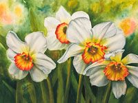 Watercolor painting of white narcissus by watercolor artist Lisa Hill Kayla December Flower