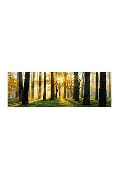 Sunset Trees Canvas Wall Art