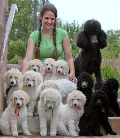 Avas 8 wk grp w erica2. So many cute standard poodle puppies!