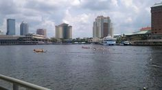 Dragon boat races August 2011 tampabay.
