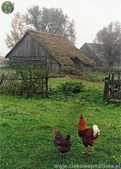 of our farm life. Sweet memories, hard work, great love for animals and family. (Everytime I see an old barn I have to stop the car, grab my camera, and capture the past) Country Charm, Country Life, Country Living, Farm Barn, Old Farm, Vie Simple, Country Barns, Country Roads, Chickens And Roosters