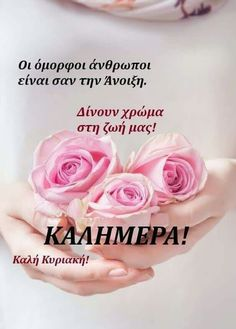 Good Morning, Tv, Rose, Wallpapers, Buen Dia, Pink, Bonjour, Television Set, Wallpaper