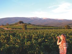 Provence Vineyards #Provence #Wines @Franceenvelo