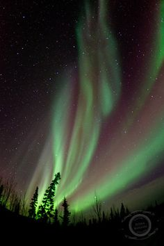 - northern lights, Dawson City, Yukon - priska wettstein photography