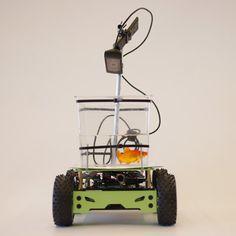 "Goldfish-driven vehicle designed for ""enhanced pet mobility""."