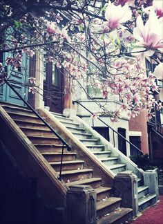 Boston Brownstones. Maybe I'll get to live in one of these someday!  :)