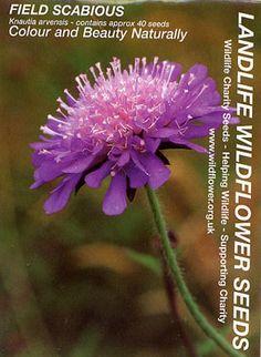 Landlife Field Scabious Seeds £1.49