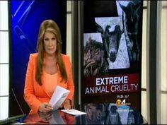▶ CBS4 Investigates Severe Animal Cruelty « CBS Miami - YouTube