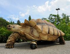 """Gamera, a 12-year-old African spur-thighed tortoise, shows off his new front """"leg"""" at Washington State University in Pullman, Wash. Gamera had to have his leg amputated after an infection set in. To aid in the tortoise's recovery, doctors at WSU's Veterinary Teaching Hospital replaced Gamera's leg with a small swiveling ball-type caster attached to its shell with an epoxy adhesive.  Henry Moore, Jr. / Washington State Univ. / AP"""