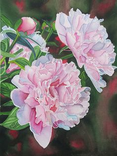 Pretty in Pink - Watercolour 9 1/2 x 13 1/2`` by Karen Park…