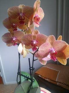 Marianne´s hantverk : Mina orkideér