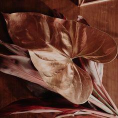 """76 curtidas, 3 comentários - As Floristas por Carol Piegel (@asfloristas) no Instagram: """"Quando se fala de tendência, é legal ver que muitas coisas já estão rolando há algum tempo,  mas só…"""" Antelope Canyon, Floral, Nature, Travel, Instagram, Design, Florists, Weather, Stuff Stuff"""