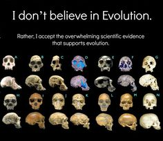 "We're not ""descended from monkeys,"" despite what you may believe.  Rather, we share a common ancestor with modern day primates.  There's a ton of evidence to support this theory, which is why it's a scientific theory and not just a hypothesis."