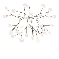 Heracleum II Small Nickel