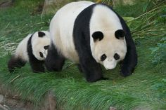 Where do you think you're going Mom?. I love the panda's.Please check out my website thanks. www.photopix.co.nz