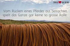 Vom Rücken eines Pferdes aus betrachtet, spielt das Ganze gar keine so große Rolle.  #Pferde #reiten