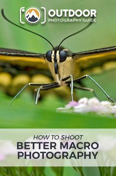 Using Your Depth-of-Field Preview Button | OPG