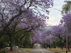 Pretoria Pretoria, South Africa, The Good Place, Tourism, Things To Do, Country Roads, Vacation, Architecture, Places