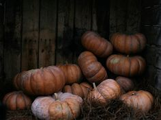 Welcome to the land of all things fall and Halloween! Samhain, Autumn Day, Autumn Leaves, Winter, October Country, Over The Garden Wall, Fall Harvest, Harvest Season, Fall Halloween