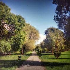 #parchi#alberi#piante#foglie#foglieverdi#tronco#legno#autunno#nature_sulthans#nature_skyshotz#natura#arte_of_nature#love_nature#jj_leaves#bestnatureshot#nature_close_up#Milano#milanonotes#milanocityoffical#milanodavedere#milanodaclick#igerlombardia#lombardia#ig_heartshot#ig_great_shots by blugold_60