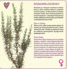rozmarin-lekarsky Medicinal Herbs, Korn, Herb Garden, Detox, Essential Oils, Medicine, Health Fitness, Sweet, Syrup