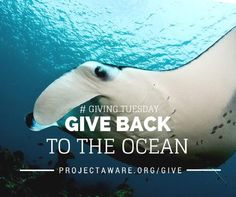 # GIVING TUESDAY - Give Back to the Ocean