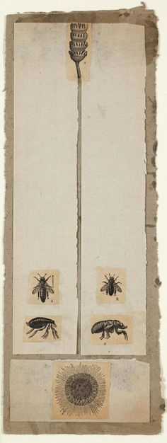 Robert Rauschenberg - c.1952, Untitled [insects and pod] Collage: engravings and paper, mounted on paperboard (35.6 x 12.7 cm)