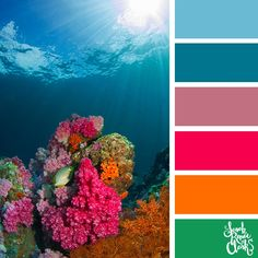 Beautiful coral colors Explore the beautiful colors of the ocean with these 25 color palettes inspired by ocean life and PANTONE s 2019 Color of the Year Living Coral Find more color combinations color schemes and color palettes at Color Palette For Home, Ocean Color Palette, Color Schemes Colour Palettes, Ocean Colors, Colour Pallette, Color Combos, Colours, Coral Color Schemes, Bright Colors