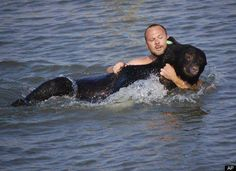 In 2008 a black bear was shot with a tranquilizer dart in a Florida neighborhood. He bolted into the water and after 25 yards he began to struggle against the effects of the dart. When wildlife biologist Adam Warwick saw what was happening, he raced into the water after the 375 pound bear and pulled him to safety. The bear was later released into a preserve.