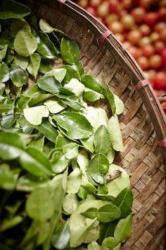 Kaffir Lime Leaves by Ewen Bell