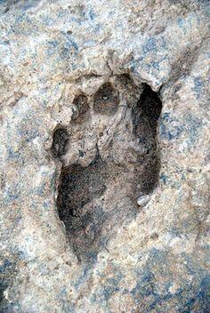 Oldest Footprint Ever Found  This fossil footprint found near Ileret, Kenya, is 1.5 million years old. These footprints are the oldest ever found of the human genus.