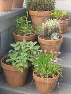 An herb garden off my kitchen. Herb Garden, Seaside, Planter Pots, Flowers, Outdoors, Kitchen, Ideas, Design, Vegetable Garden