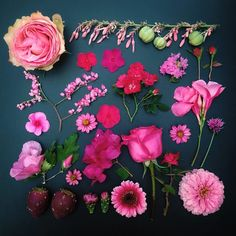 Colors Organized Neatly: The Garden Collection - Pink Flowers by Emily Blincoe.