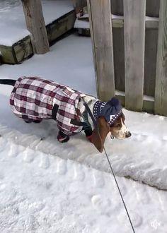 Basset Basset Puppies, Bloodhound Dogs, Hound Puppies, Basset Hound Puppy, Cute Puppies, Cute Dogs, Dogs And Puppies, Dog Mixes, Bassett Hound